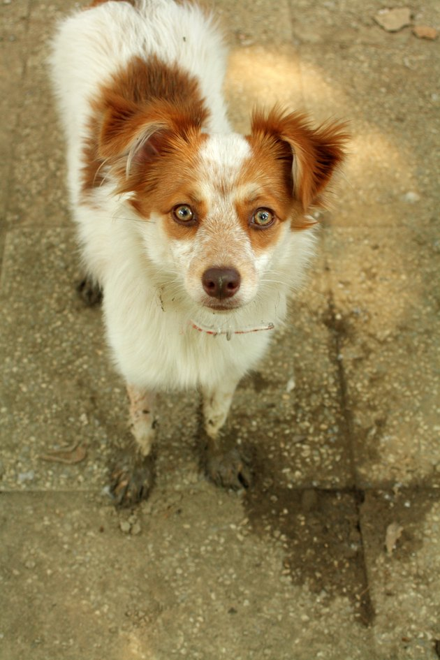 Cute Ginger Dog