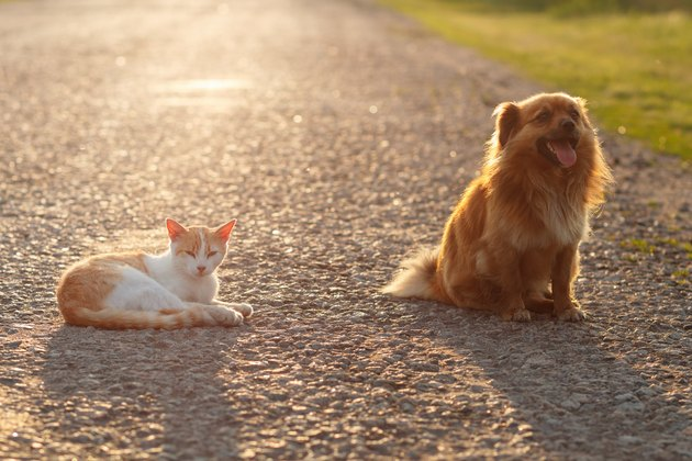 Cat and dog resting together on the warm asphalt road.