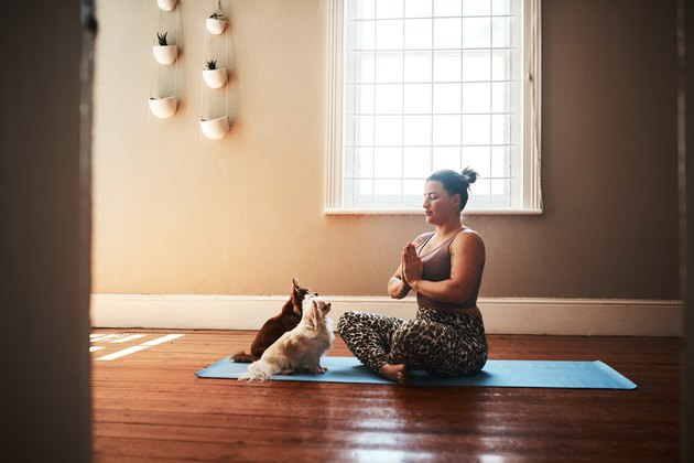 two dogs looking at their owner while she meditates