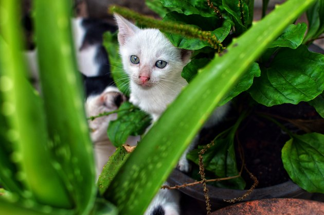 kitten in the garden
