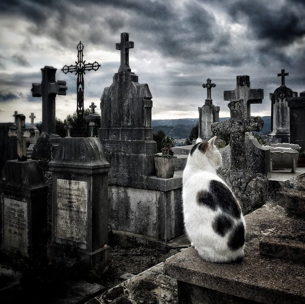 Cat In Cemetery Against Cloudy Sky