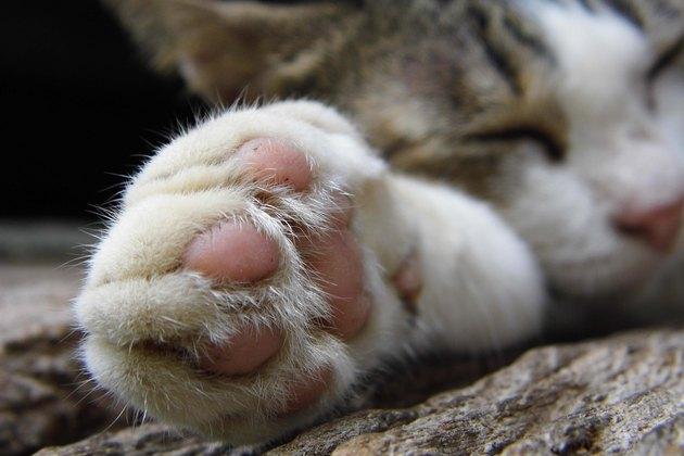 Foot of cat sleep on wooden floor