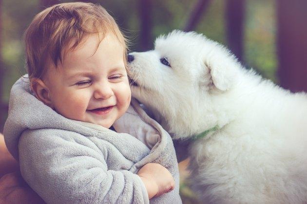Child with samoyed puppy