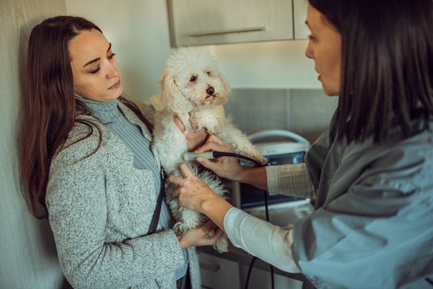 Doctor and owner looking at dog  in veterinary clinic