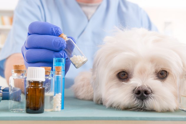 Homeopathy for a dog