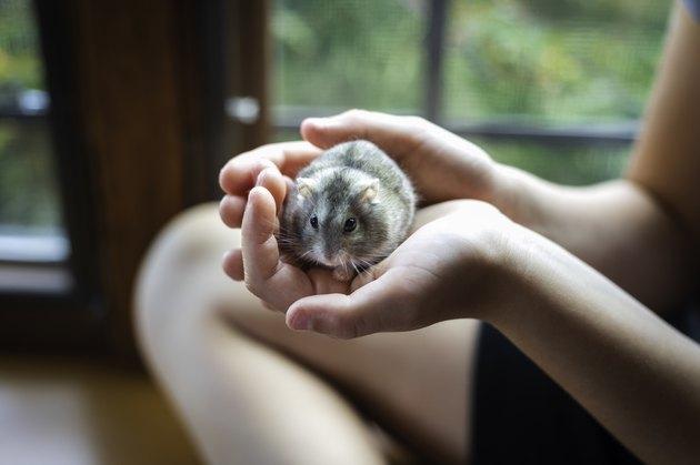 Girl Holding First Pet Hamster