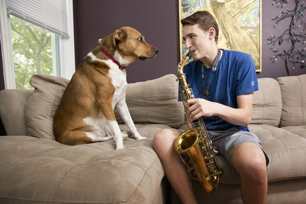 Teenage boy playing saxophone next to dog