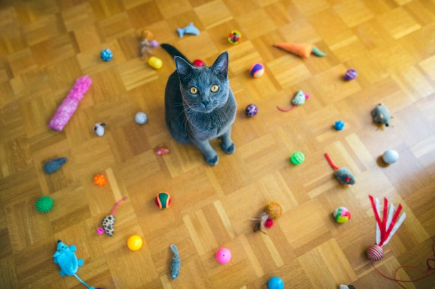 cat surrounded by toys