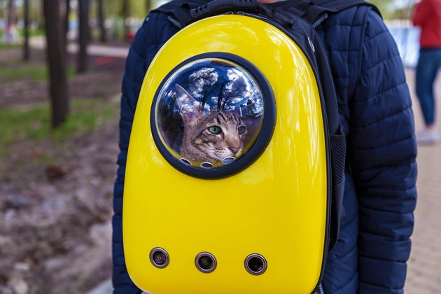 backpack for carrying a cat