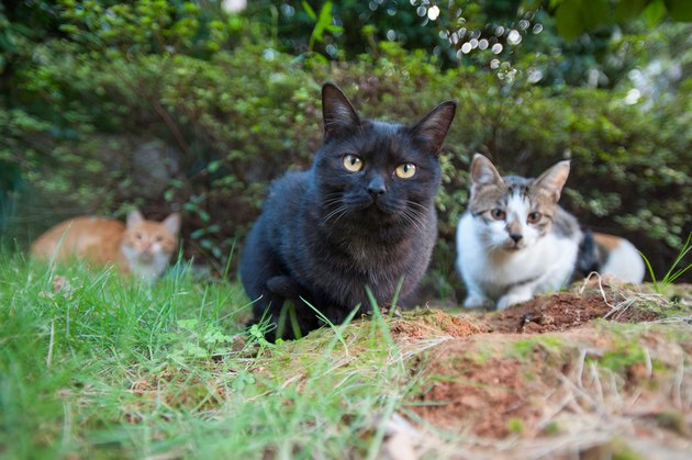 Feral cats outdoors