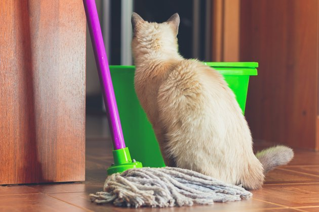 cat sitting near mop and looking into green bucket