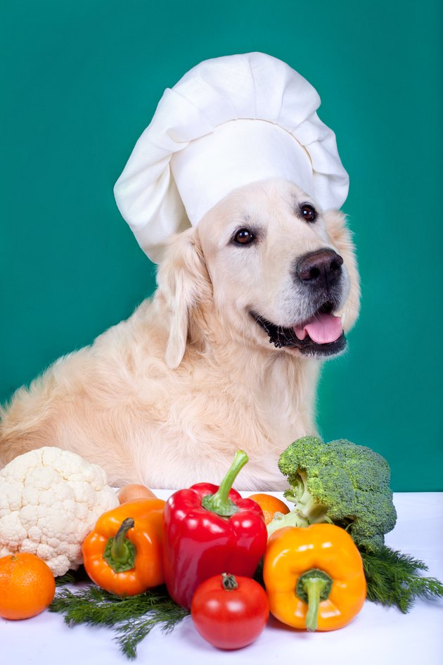 Golden retriever dog cooking