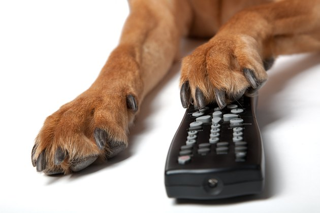 Dog pas with Remote Control