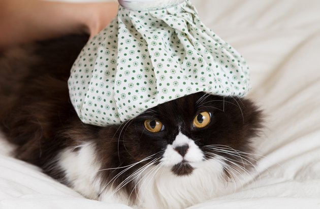 Black and white cat with patterned water bottle on its head