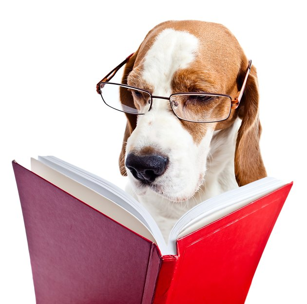 dog in glasses reads the red book