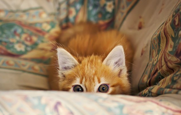 Stalking little kitten