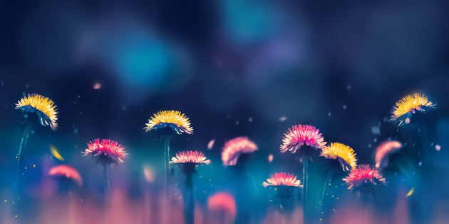 Pink and yellow dandelions on a blue and purple background. Spring summer creative image. Free space for text. Wide format.