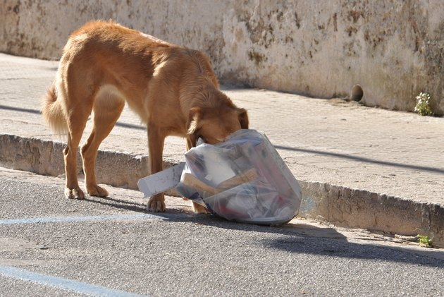 Dog who eats garbage bag