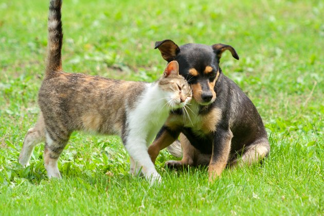 cat and dog are touching their heads. Beautiful animal friendship. Cat and dog love