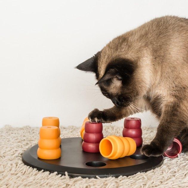 Cat solving pet puzzle