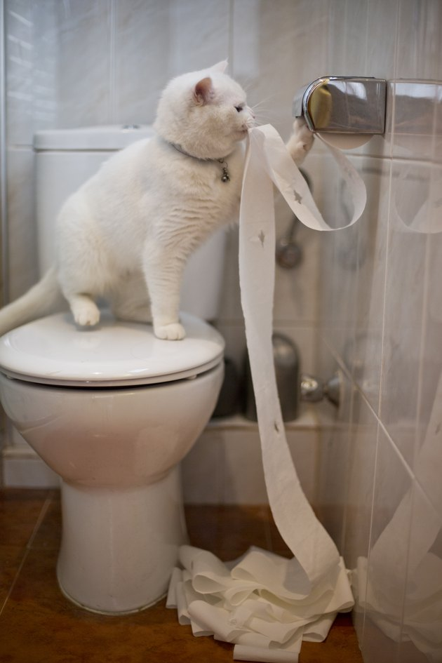 Cat playing with toilet paper