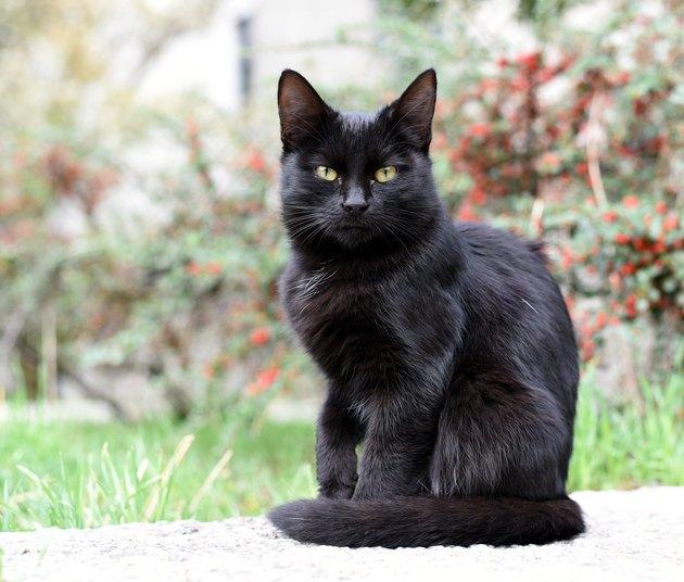 Black kitty on the street