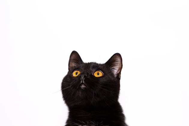 Adorable black cat isolated on white background