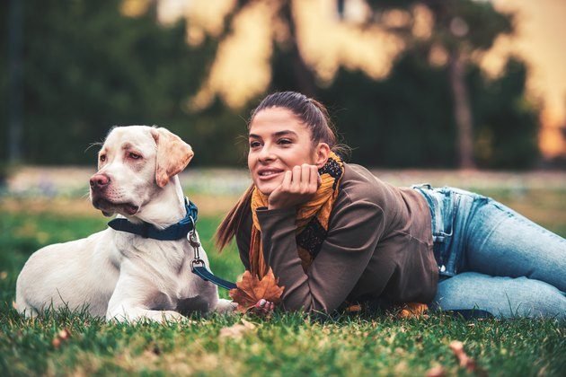 Young woman with a dog in the park. Pets and animals concept
