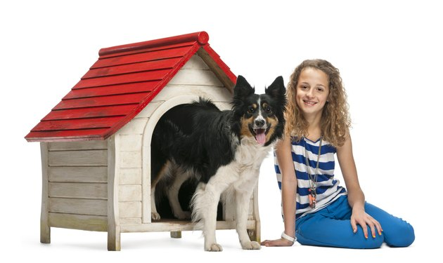 Young girl sitting next to a Border Collie insides kennel