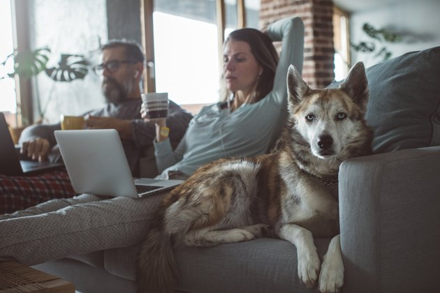 Couple using laptops on couch next to their dog.