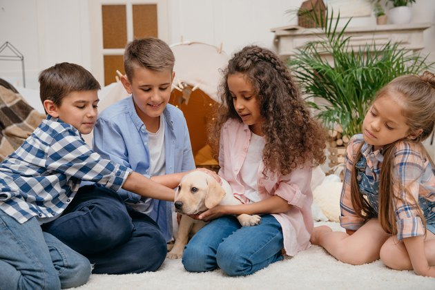 multiethnic girls and boys playing with labrador puppy at home