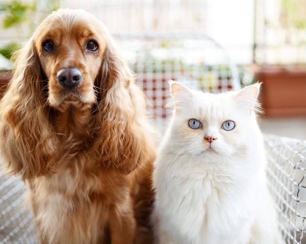 Portrait Of Dog And Cat