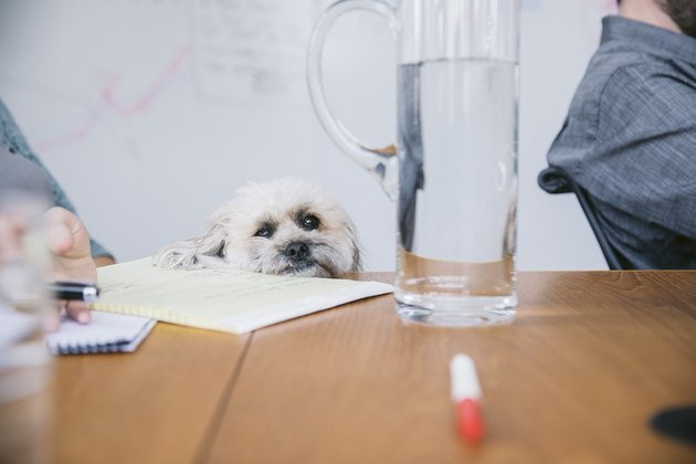 Cropped image of business people with dog looking at jug on table in board room