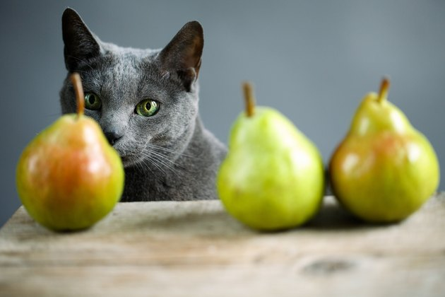 Cat and Pears