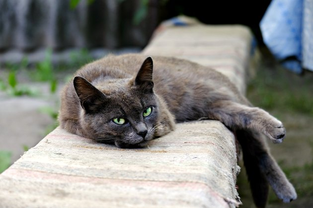 View of cat lying down on bench