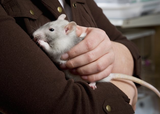 Young girl holding a rat, close-up