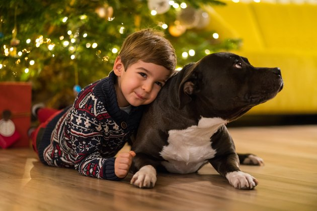 happy little boy hugging his american stafford dog under christmas tree