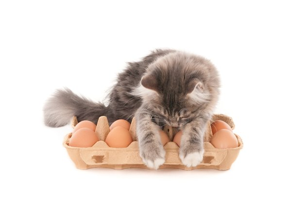 Gray kitten looking at fresh eggs in eggs box