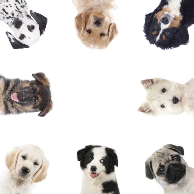 Square frame of different puppies,dogs