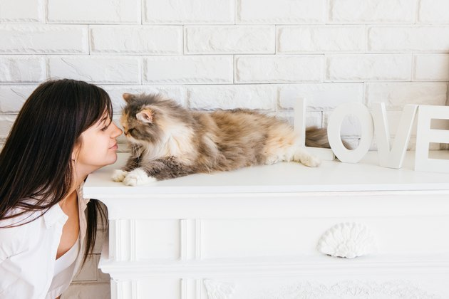 Cat and her young owner rubbing noses