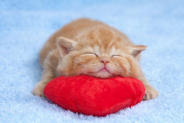Little cat sleeping on red heart-shaped pillow