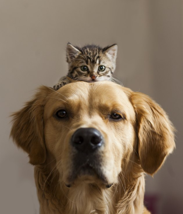 Kitten sitting on dog