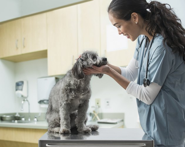 veterinarian examining dog in hospital