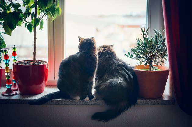 Two cats sits on window sill and looking outside