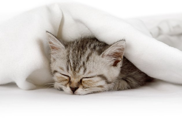 Cute little kitten sleeping covered with blanket