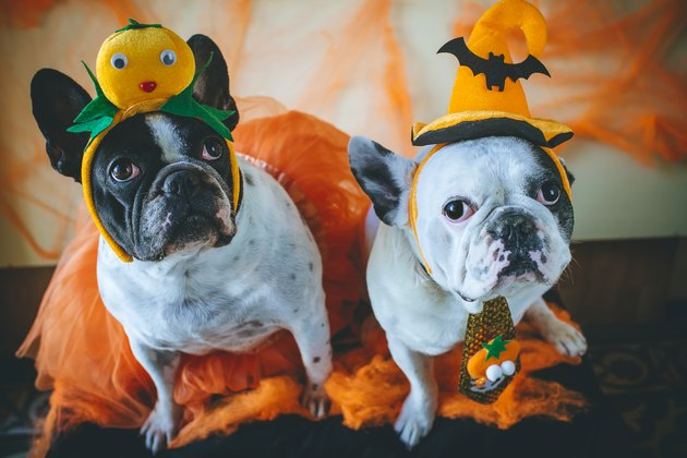 two dogs in Halloween costumes