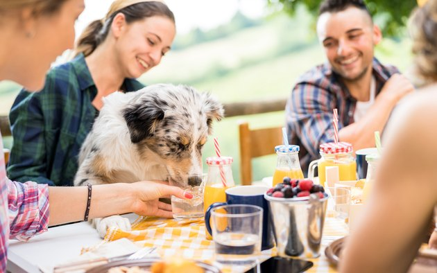 Young people picnic breakfast with cute dog in countryside farm house - Happy friends millennials having fun together outdoors at garden party - Food and beverage lifestyle concept