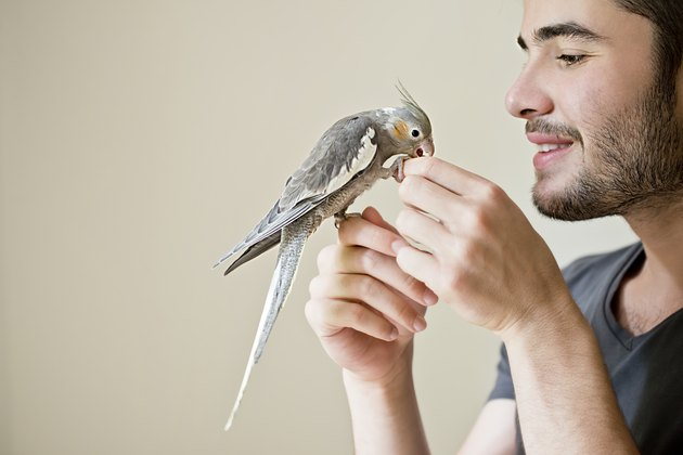 Attractive man playing with his parrot indoors