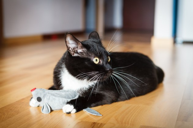 Cat playing with mouse-toy