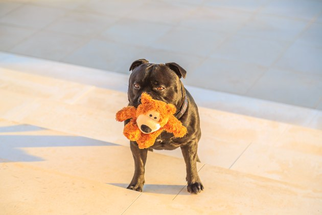 dog with teddy bear in mouth